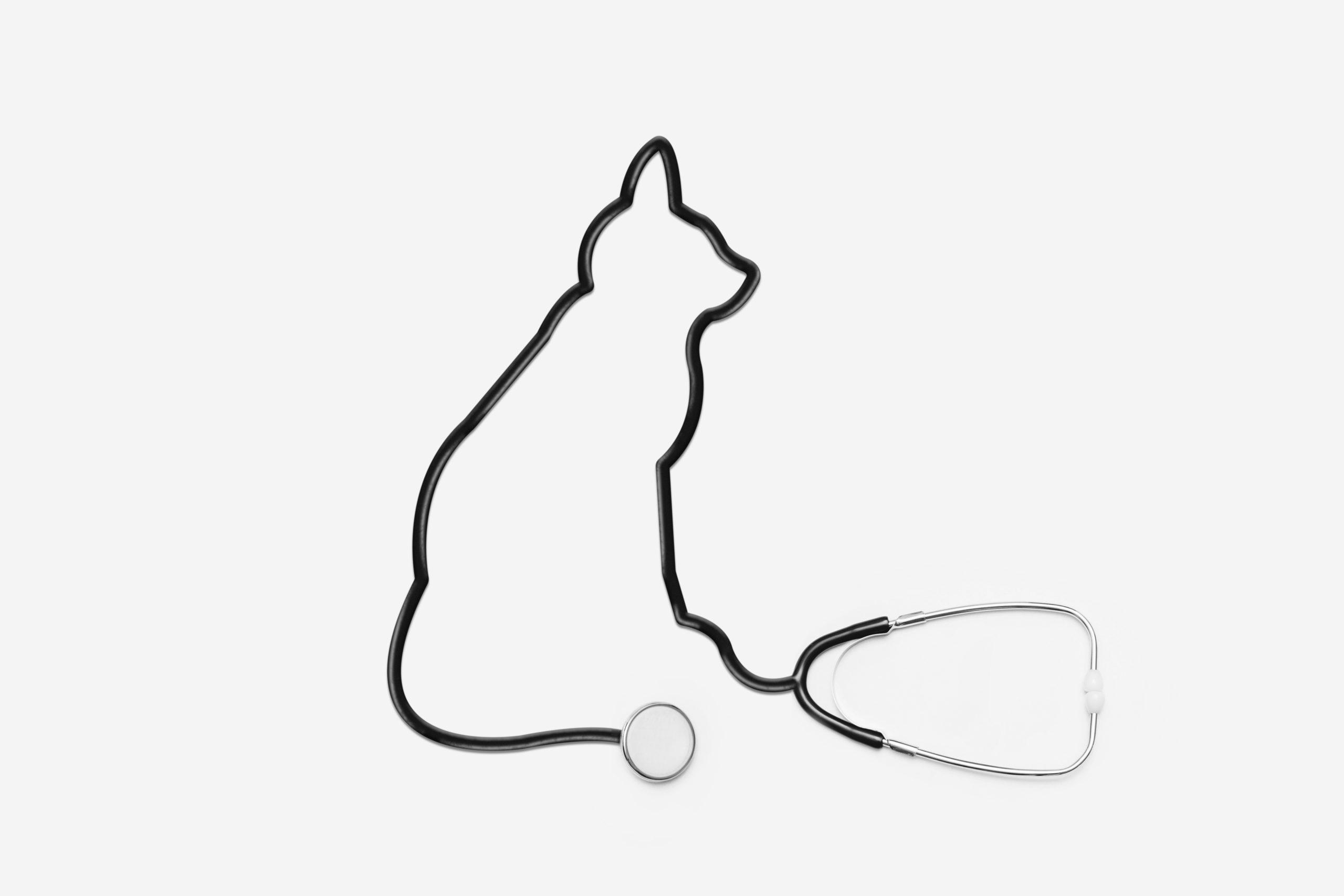 le chat Pacha, mascotte de l'unité de soins palliatifs La Mirandière