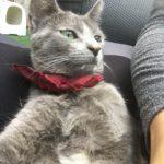 Aria, une chatoune filoute et coquinement adorable